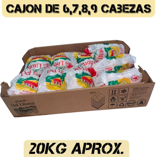 POLLO X CAJON LITORAL Y 1962
